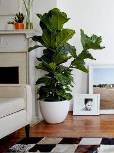 fiberglass planter pots