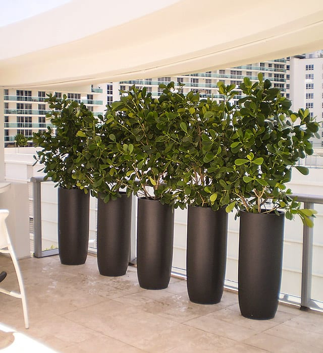 Jay Scotts fiberglass planters outside