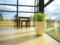 Tall round white planter in a windowed room