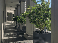 Planters between building columns