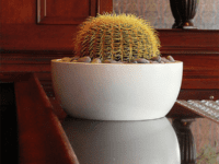 Cactus in a white planter bowl