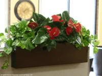 Tiergarden planter on a cubicle wall