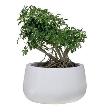 short round fiberglass planter
