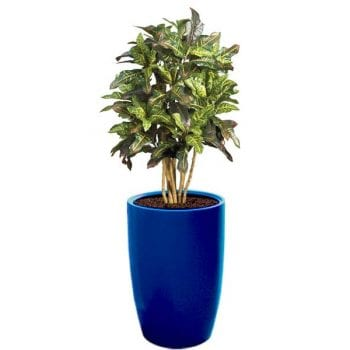 tall round blue fiberglass planter