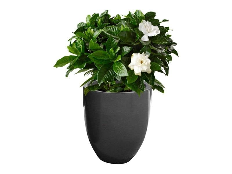 medium gray round fiberglass planter