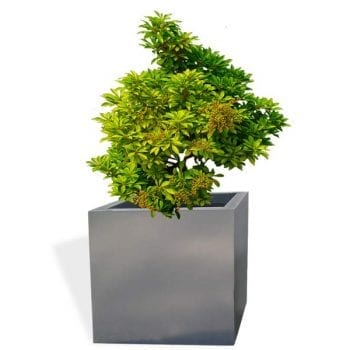 square gray fiberglass planter