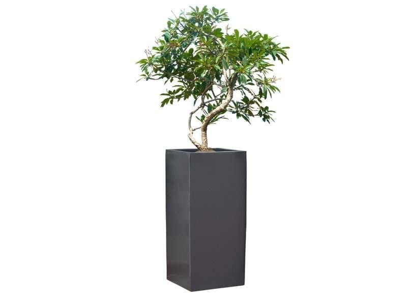 tall square fiberglass planter