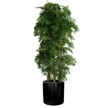 Round black planter