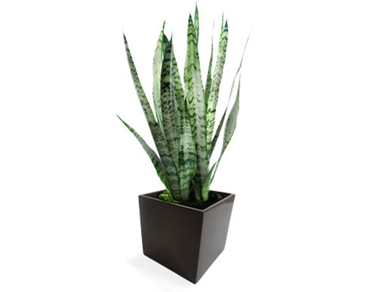 square black fiberglass planter