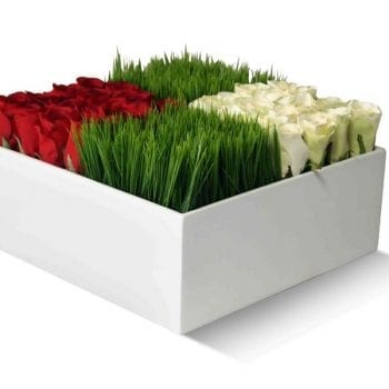 square white fiberglass planter