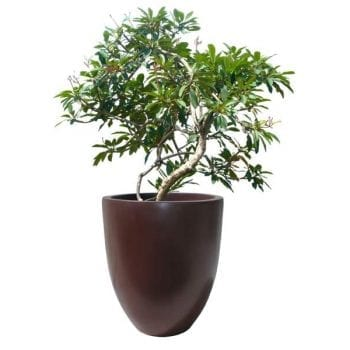 round brown fiberglass planter
