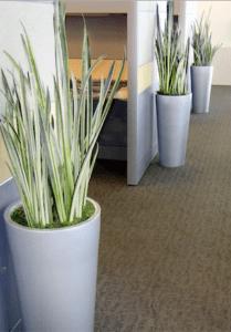 plantscaping tips