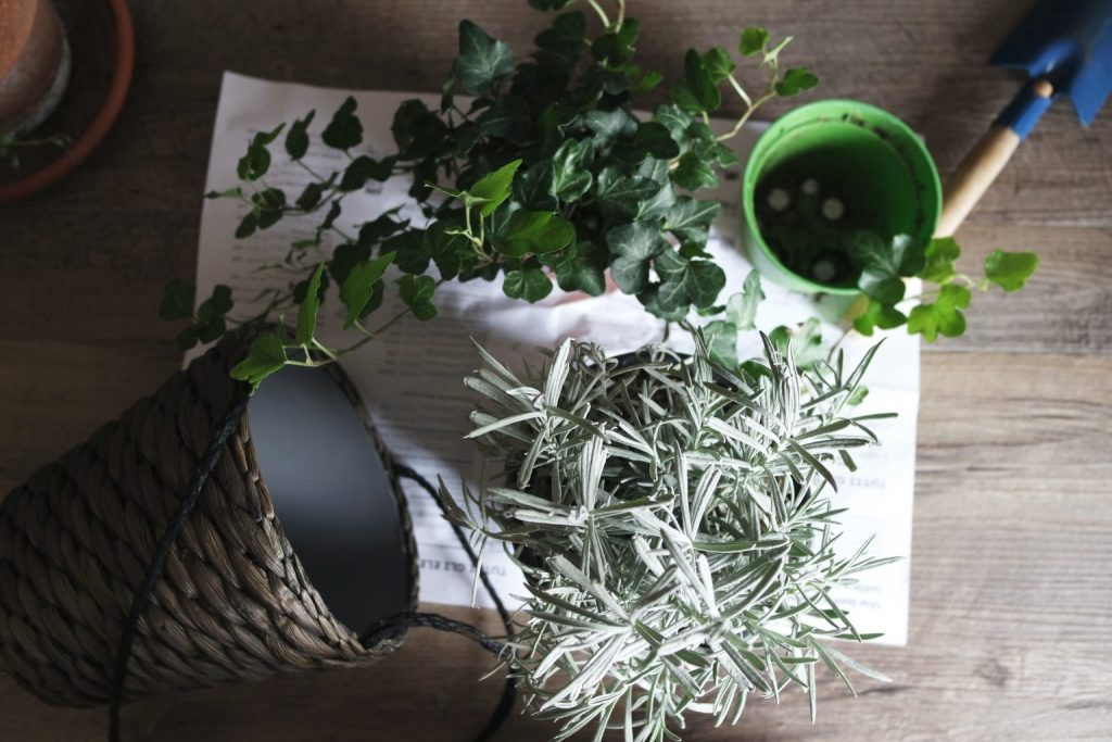 Choose plants that thrive indoors