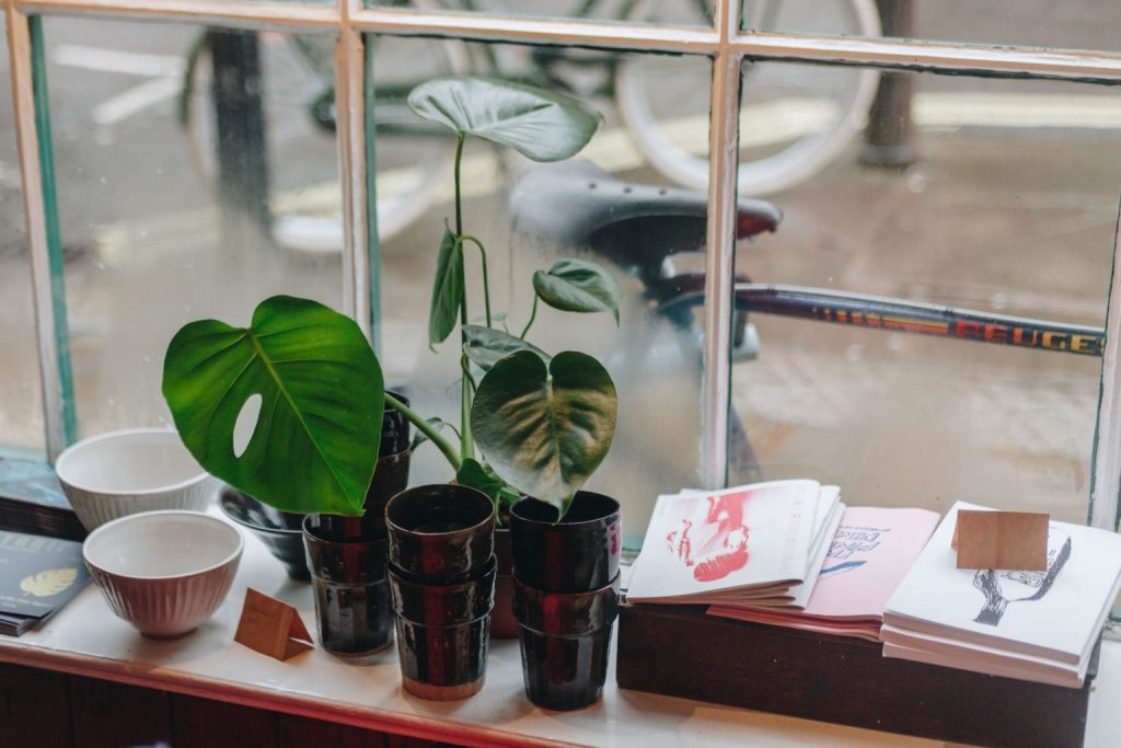 Provide adequate light for your plants