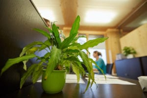 plants in your office