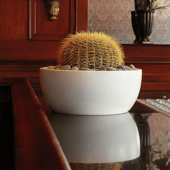 White Vienna Focus Bowl on a wooden table top