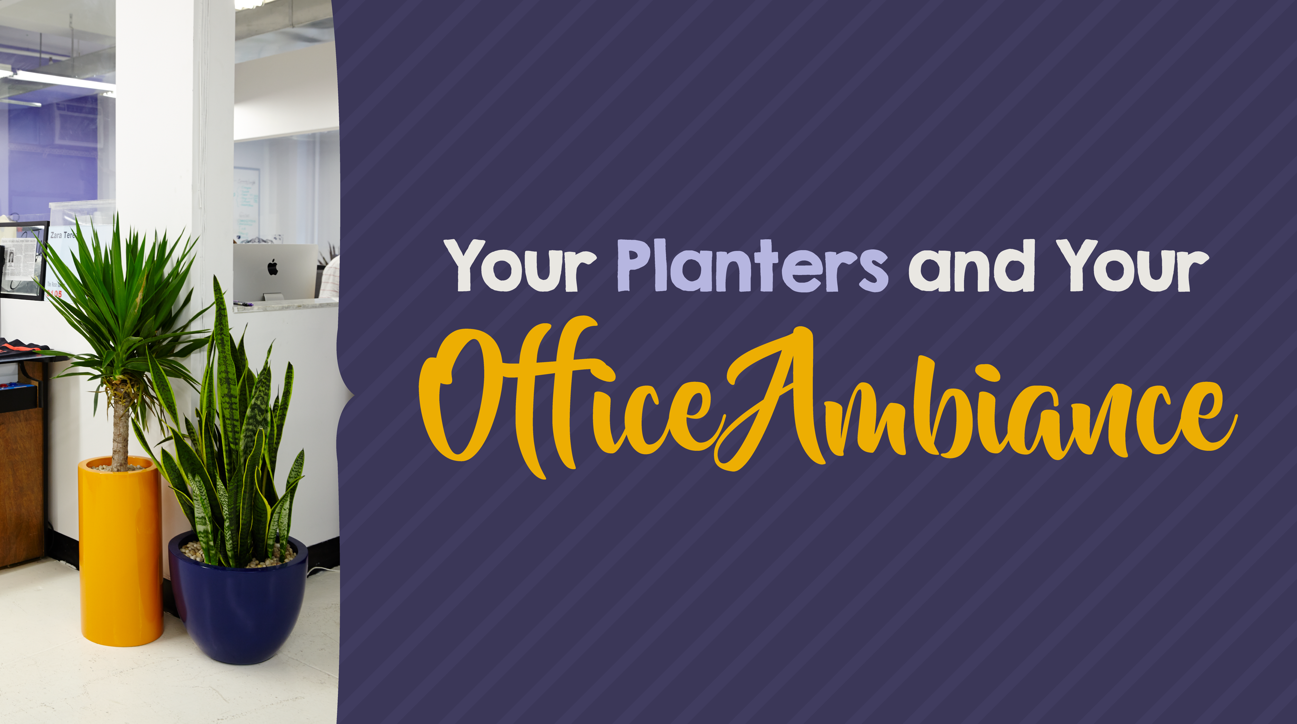 Planters and Office Ambiance