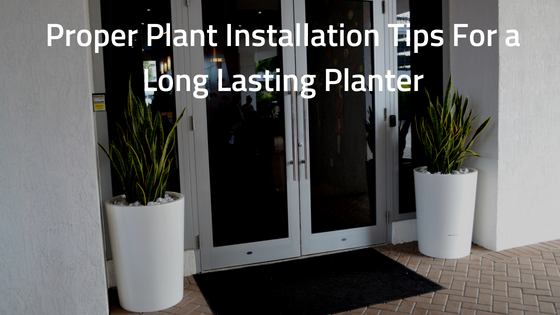 Proper Plant Installation Tips For a Long Lasting Planter-1