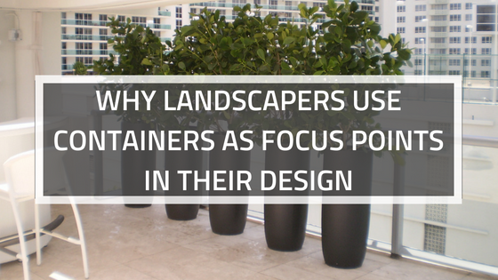 WHY LANDSCAPERS USE CONTAINERS AS FOCUS POINTS IN THEIR DESIGN