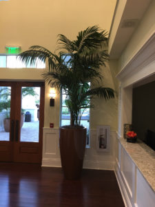 Palm tree planter