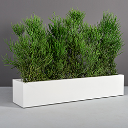 Table Top Planters
