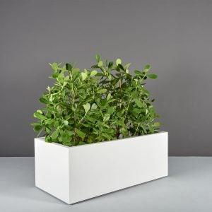 Torino Rectangular Planter