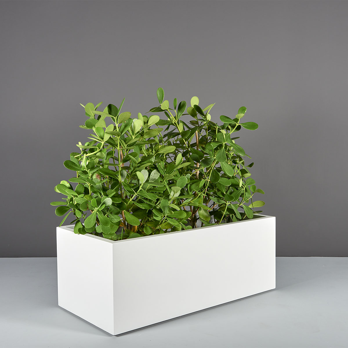 Torino Wide Rectangle Planter