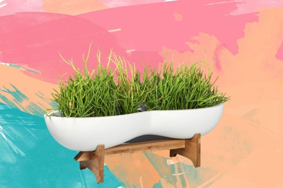 The Appeal of the Unusual Planter Shapes