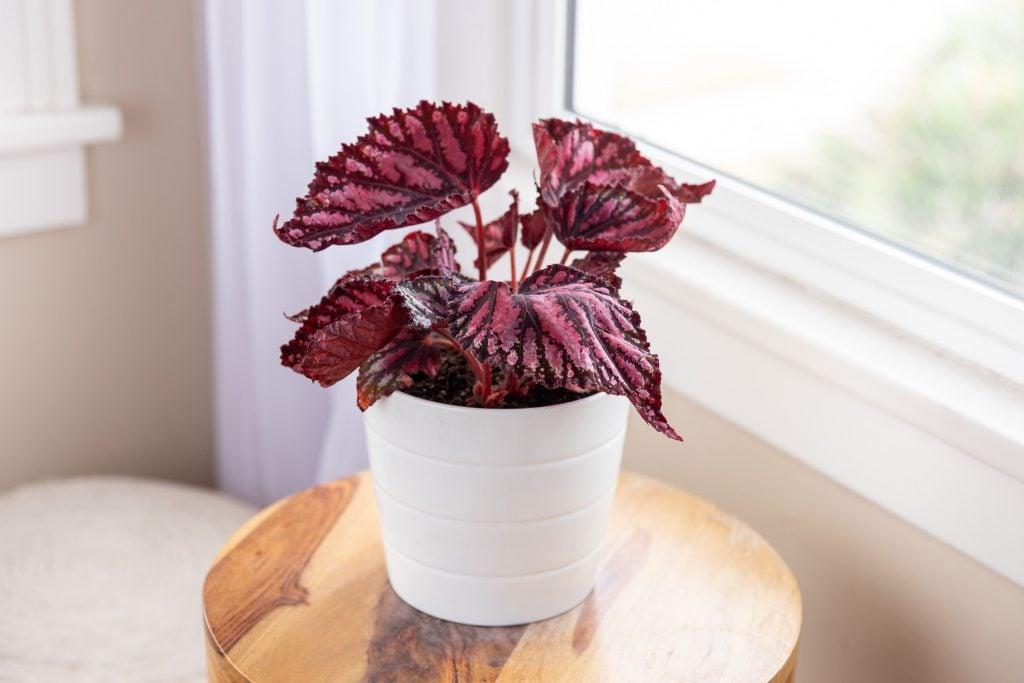 best indoor office plants