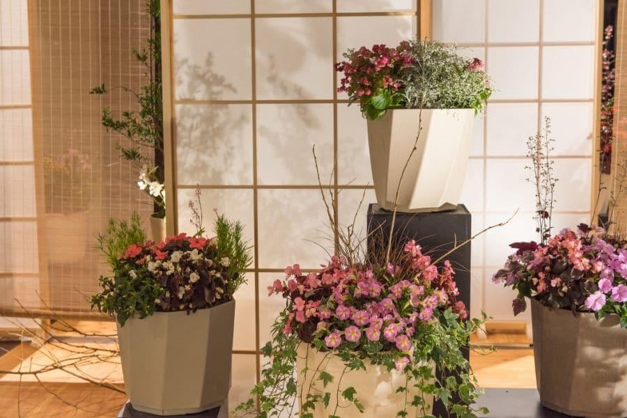 indoor flowers for beginners