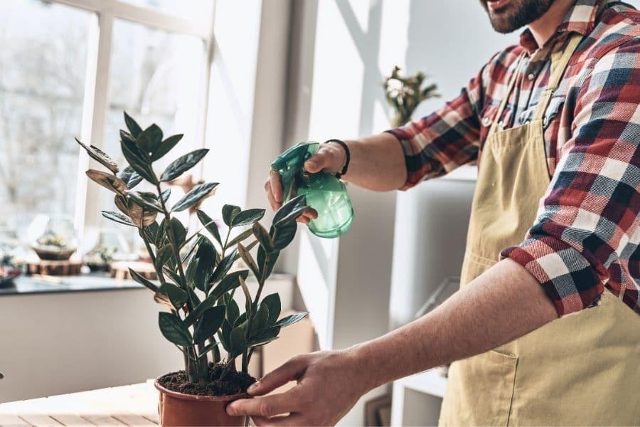 indoor gardening for beginners