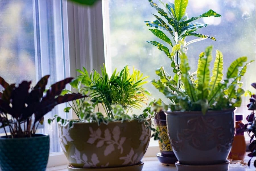 plants that clean the air and remove toxins