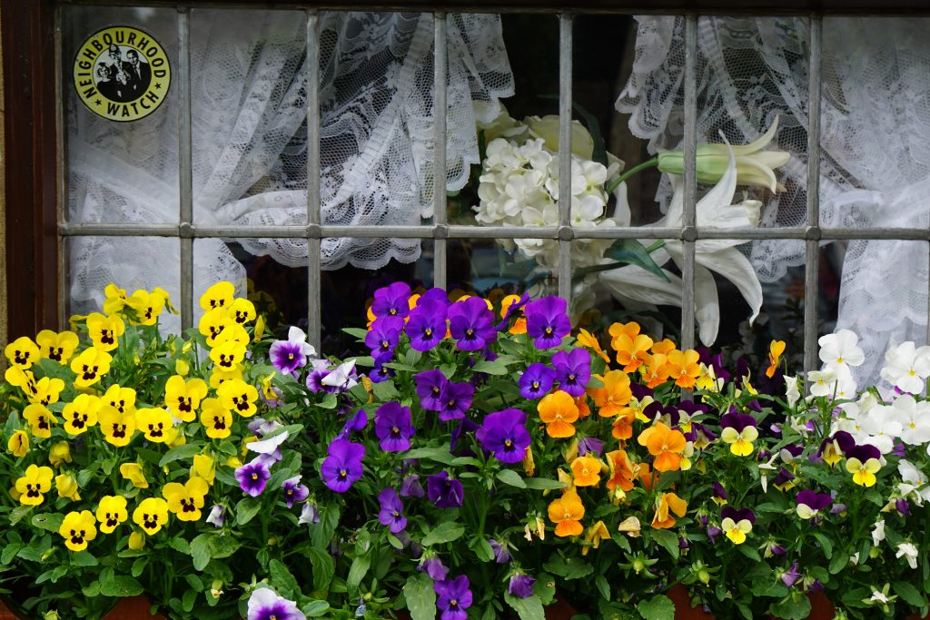 Pansies look great with white