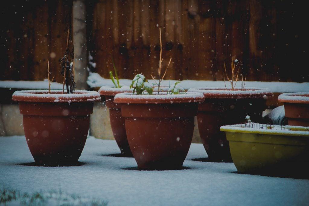 Plants bearing the snow
